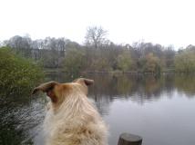 starring at the lake